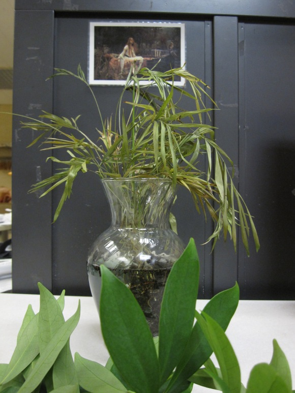 Cuttings from a plant sit in a vase on a desk.