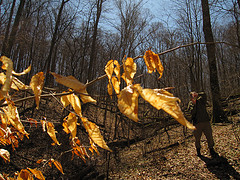 Fire Paper, taken on the Scout Ridge Trail in Morgan-Monroe State Forest.