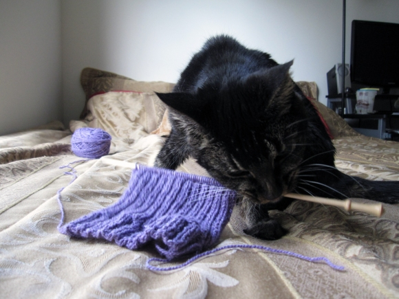 A knitting project sits on a knitting needle. A dark cat picks up the knitting need in her mouth.
