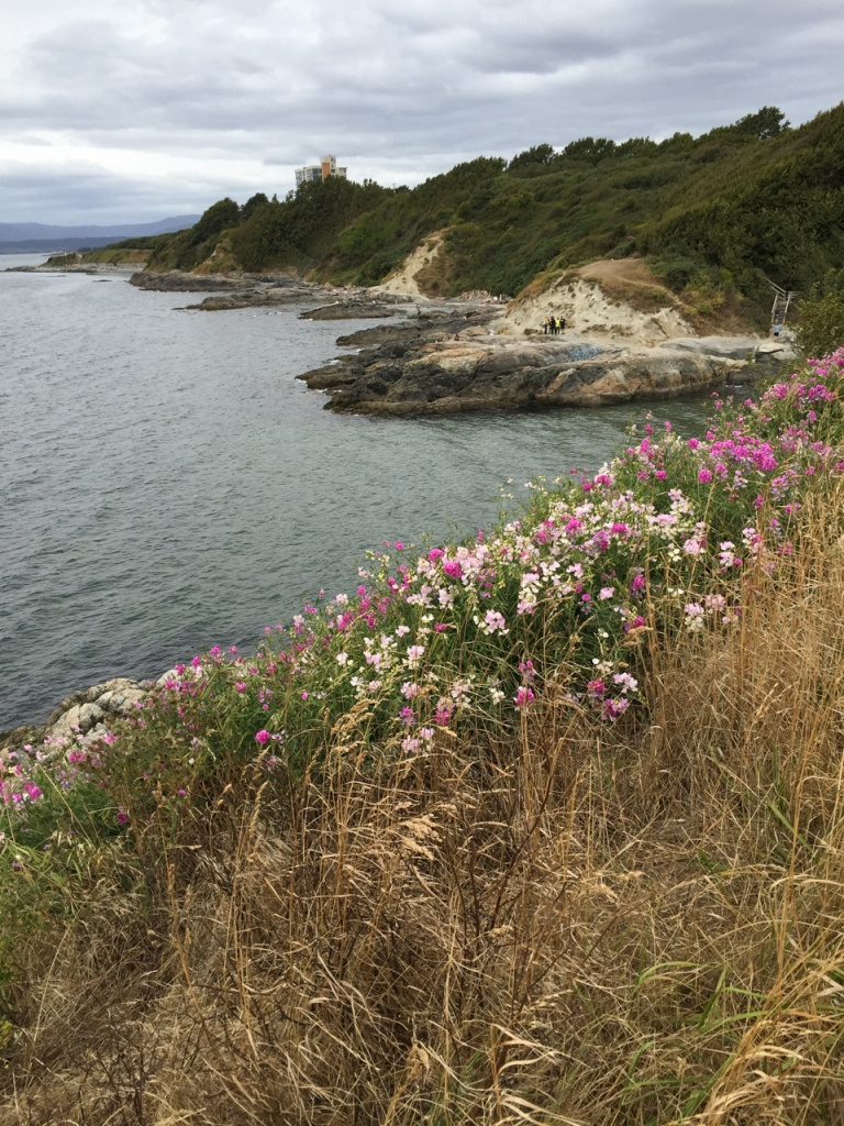 Wild flowers cling to the steep cliffside at the lookout point along Dallas Road Waterfront Trail.