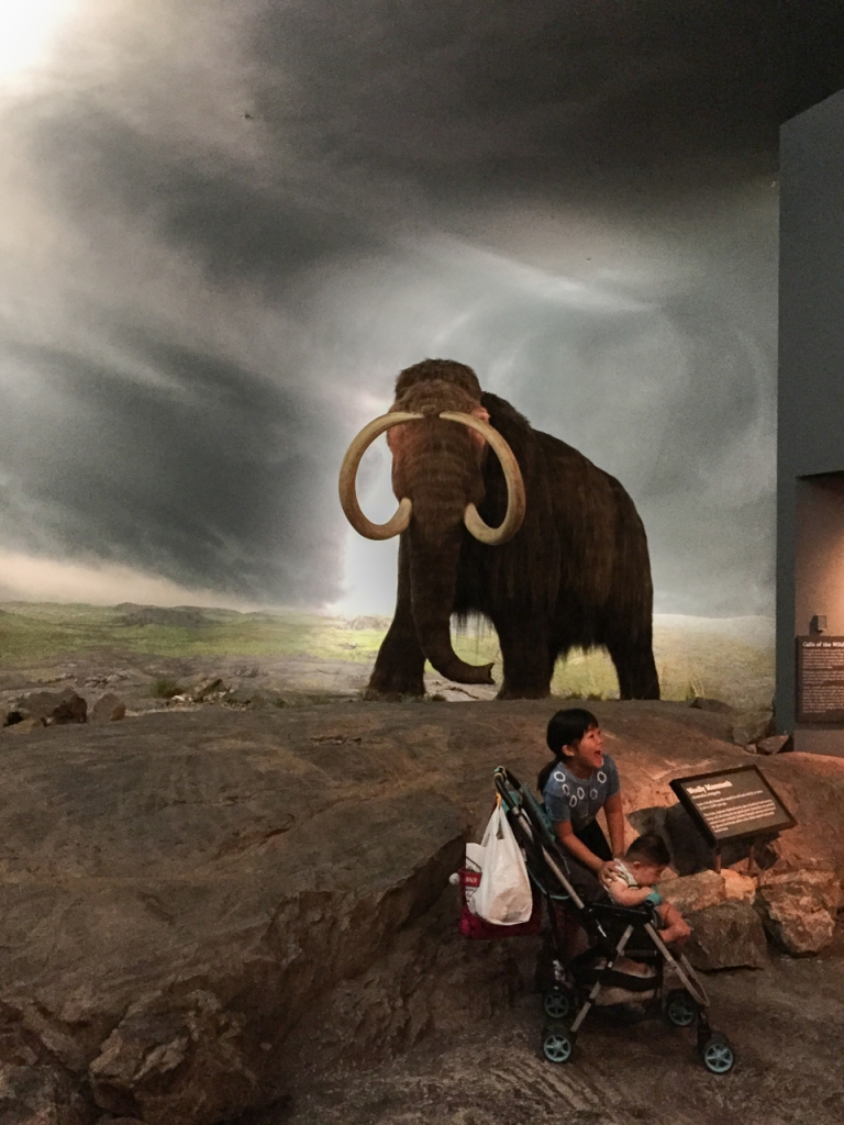 An impressive wooly mammoth at the Royal B.C. Museum.