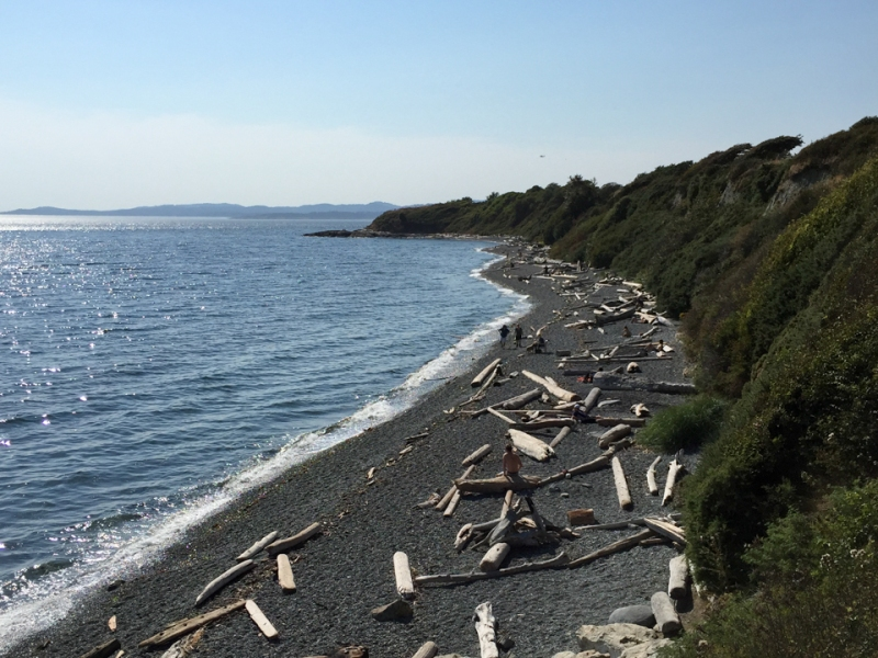 Blue water laps the pebble beach littered with driftwood.